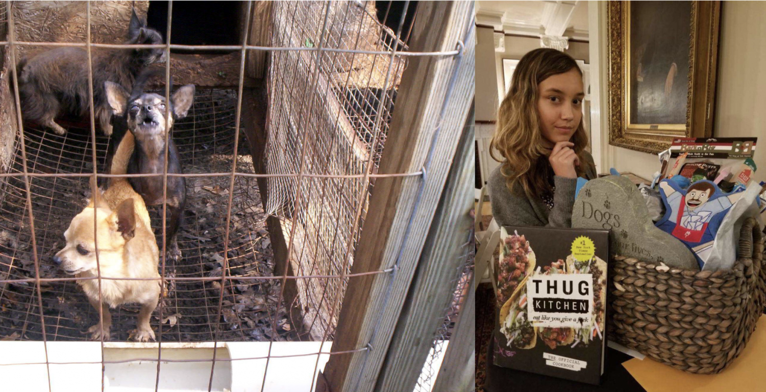 Left: An example of the cruelty of puppy mills. Right: Northfield freshman Bella Villacres working to address the problem in Colorado.